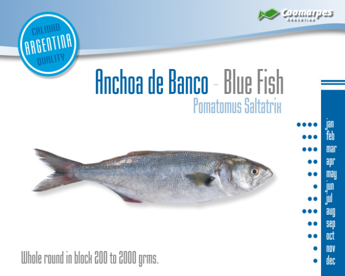 Anchoa de Banco - Blue Fish