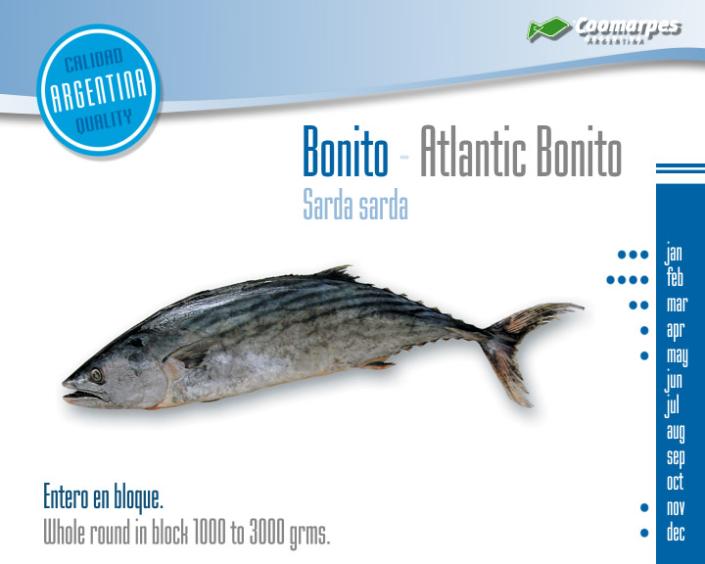 Bonito - Atlantic Bonito
