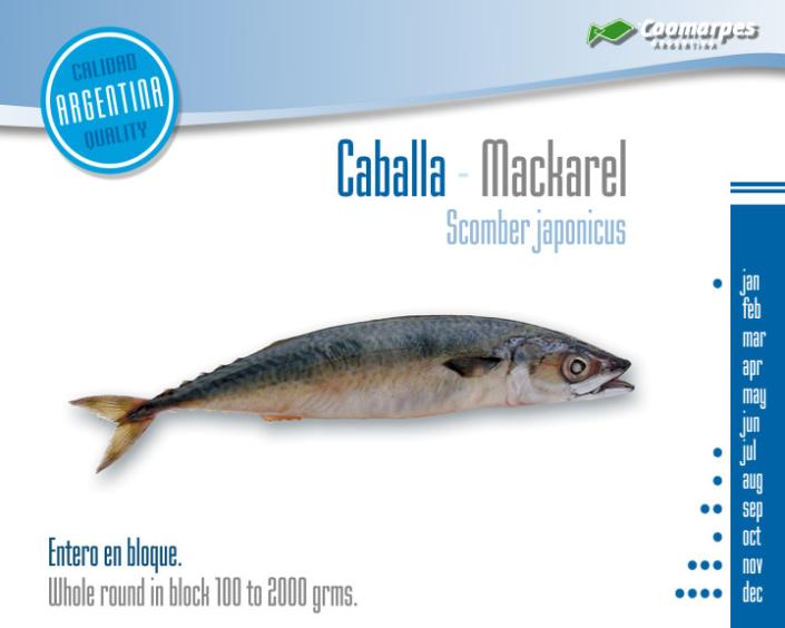 Caballa - Mackarel