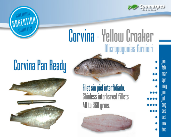Corvina - Yellow Croaker