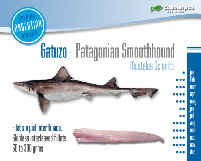 Gatuzo - Patagonian Smoothhound