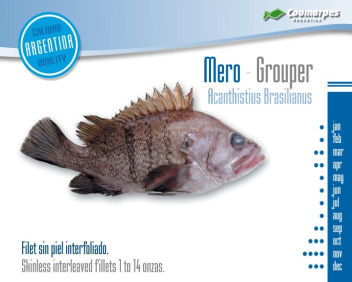 Mero - Grouper