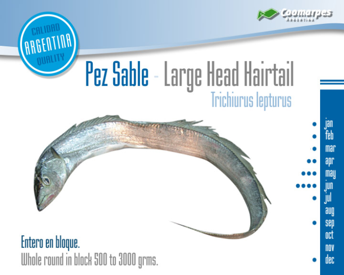 Pez Sable - Large Head Hairtail
