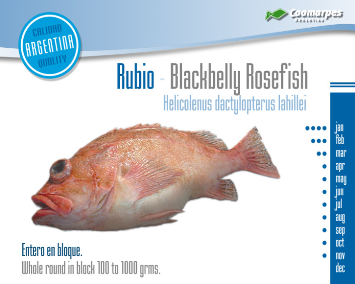 Pez Rubio - Blackbelly Rosefish