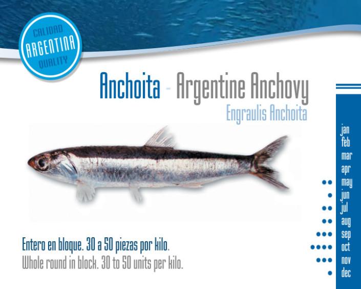 Anchoita - Argentine anchovy